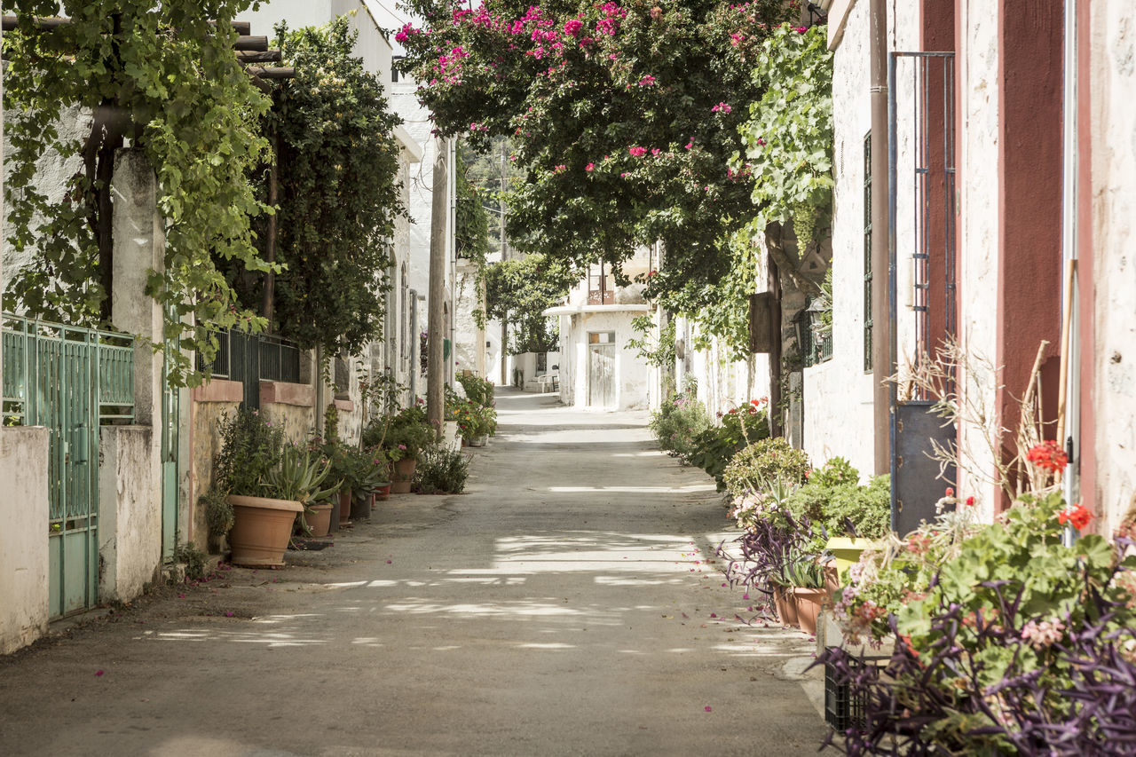 Architecture Botany Building Exterior Built Structure City Day Diminishing Perspective Footpath Formal Garden Freshness Growing Growth Long Modern Narrow Outdoors Plant Springtime The Way Forward Town Tree Treelined Vanishing Point Walkway