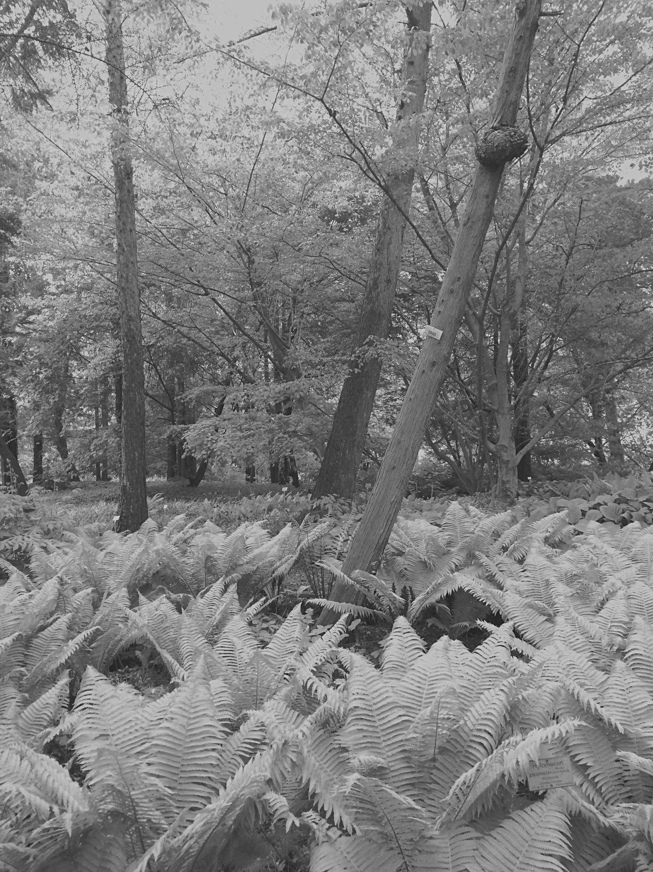 Trees Nature Plants Blackandwhite