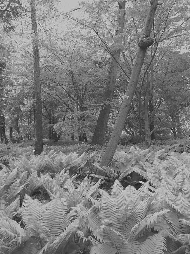 Trees Nature Plants Blackandwhite