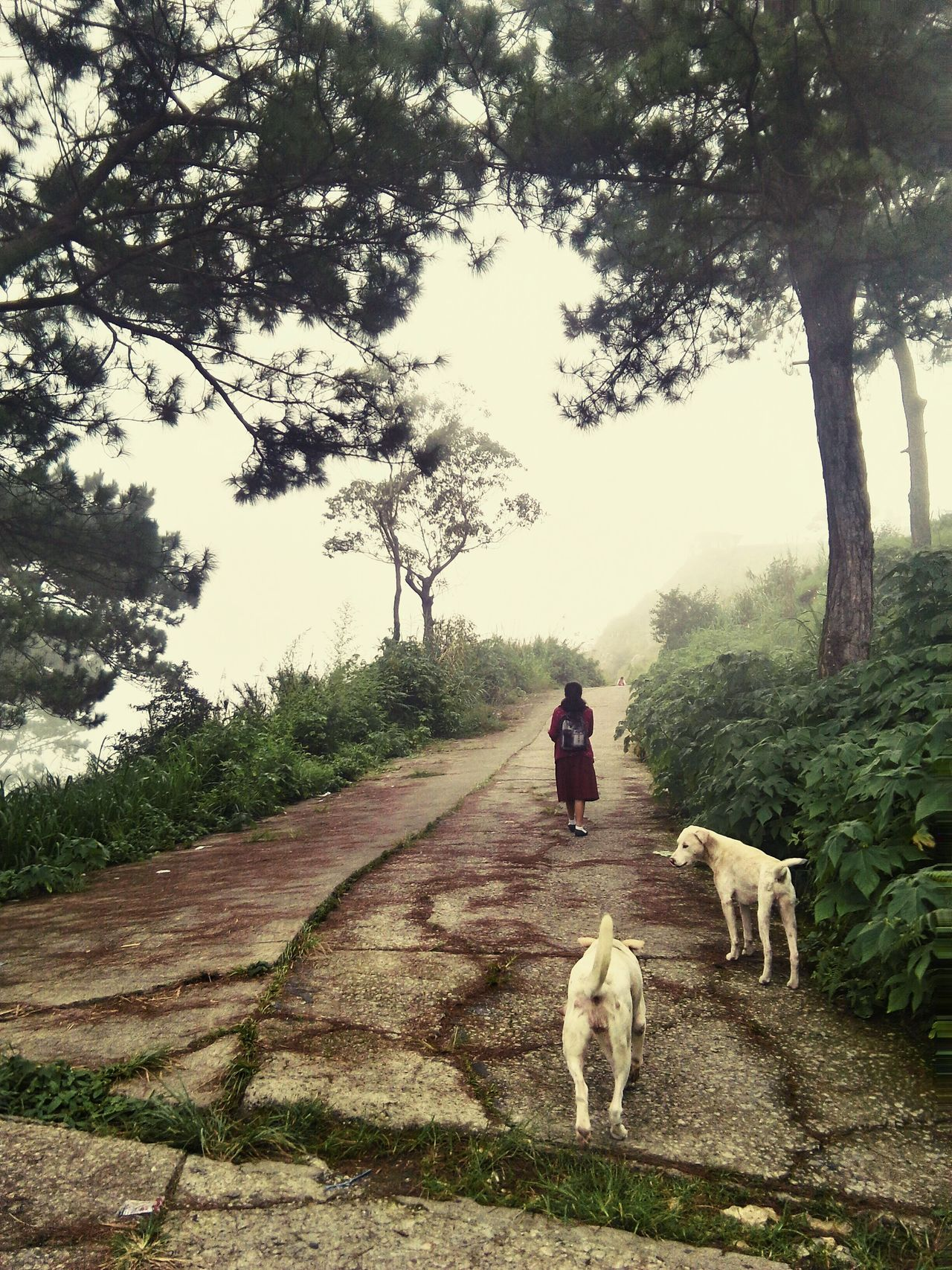 lone walk towards home after school. Alone Unknownroad Pathtohome Bravegirl Walk Foggyandcloudyafternoon Back SchoolGirl Mountainoushome Benguetbaguio Feel The Journey Asuscamera The OO Mission The Great Outdoors - 2016 EyeEm Awards The Street Photographer - 2016 EyeEm Awards The Oo Challenge Dogascompanion Mansbestfriend Showcase July! Showcase July 2016 Showcase July People And Places. People And Places People And Places Miles Away Live For The Story Live For The Story BYOPaper! The Street Photographer - 2017 EyeEm Awards The Great Outdoors - 2017 EyeEm Awards The Portraitist - 2017 EyeEm Awards The Week On EyeEm Be. Ready.