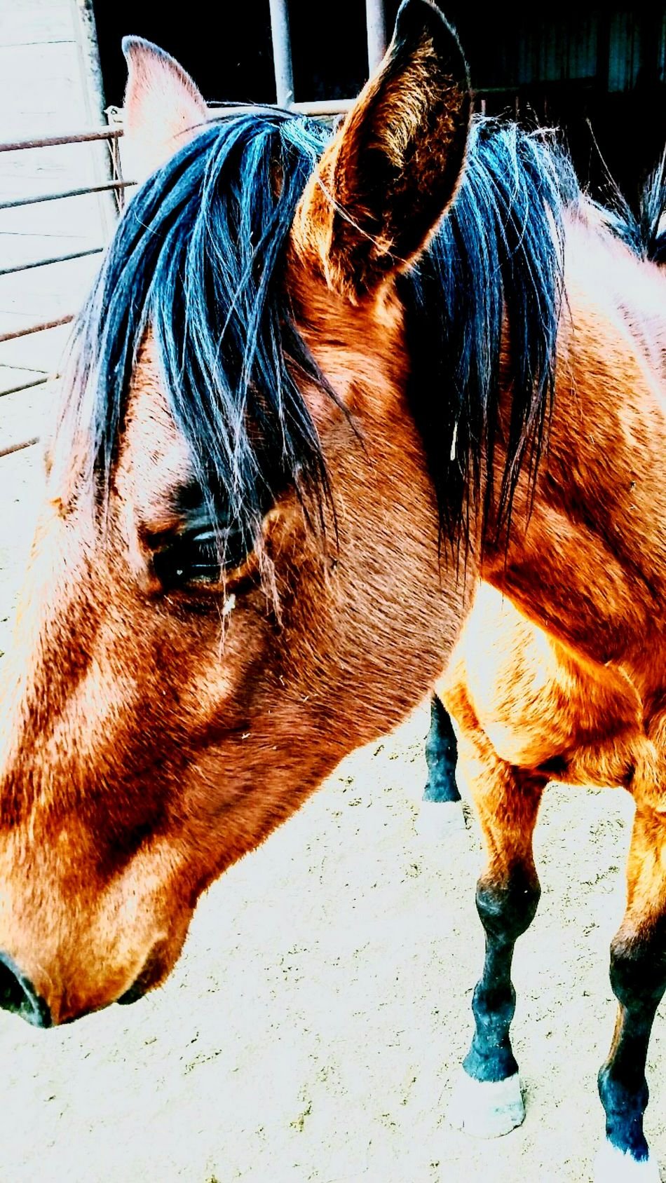 Ranch horses Animal Themes Mammal Domestic Animals One Animal No People Day Livestock Outdoors Working Animal Close-up Mane Stable Country Life Cowboy Farm Ranch Life Ranch Barn Country Living Horse Filly Color Portrait Paddock Silhouette