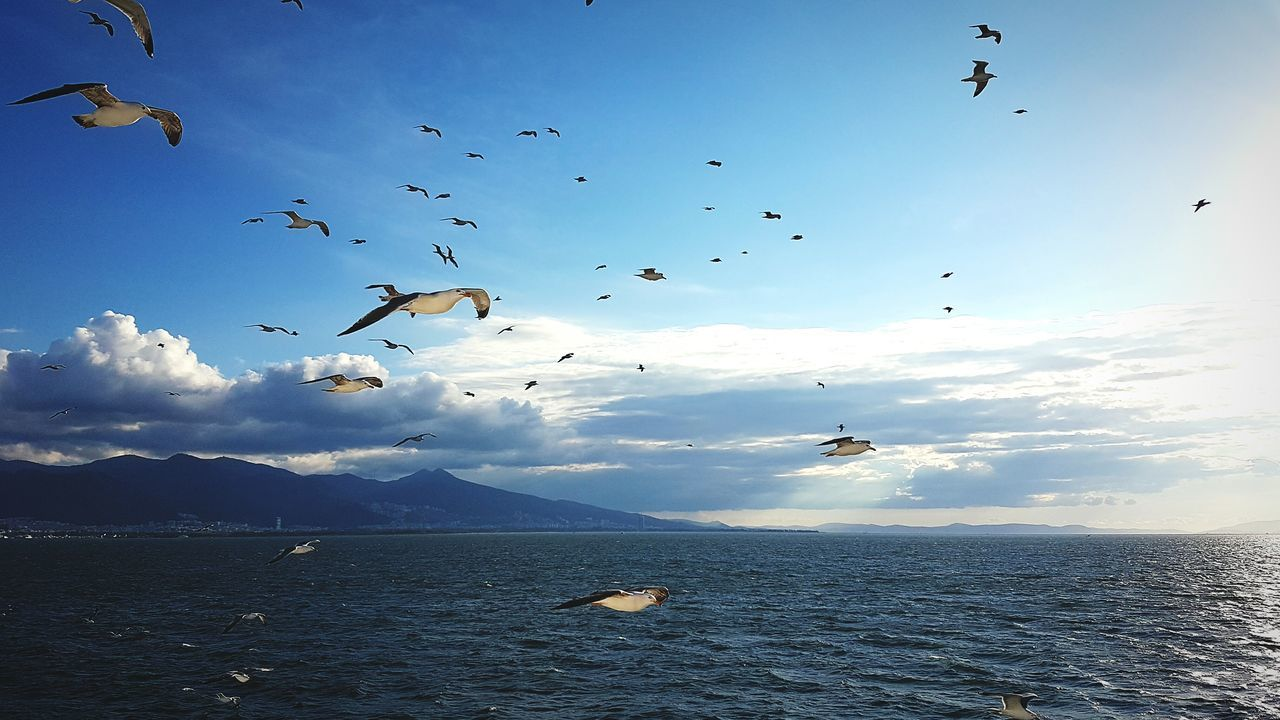 EyeEm Best Shots Seatrip Gulls In Flight Gulls And Sea Gulls And Sky Sea And Clouds Sea Seagulls And Sea Seagulls In Flight Animals
