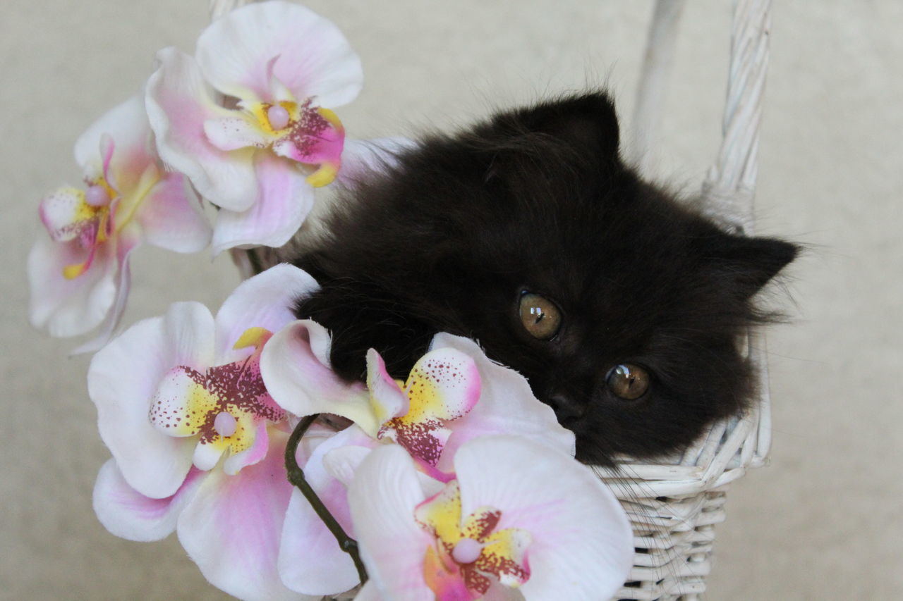 Beautiful stock photos of orchid,  Animal Themes,  Beauty In Nature,  Black Color,  Close-Up