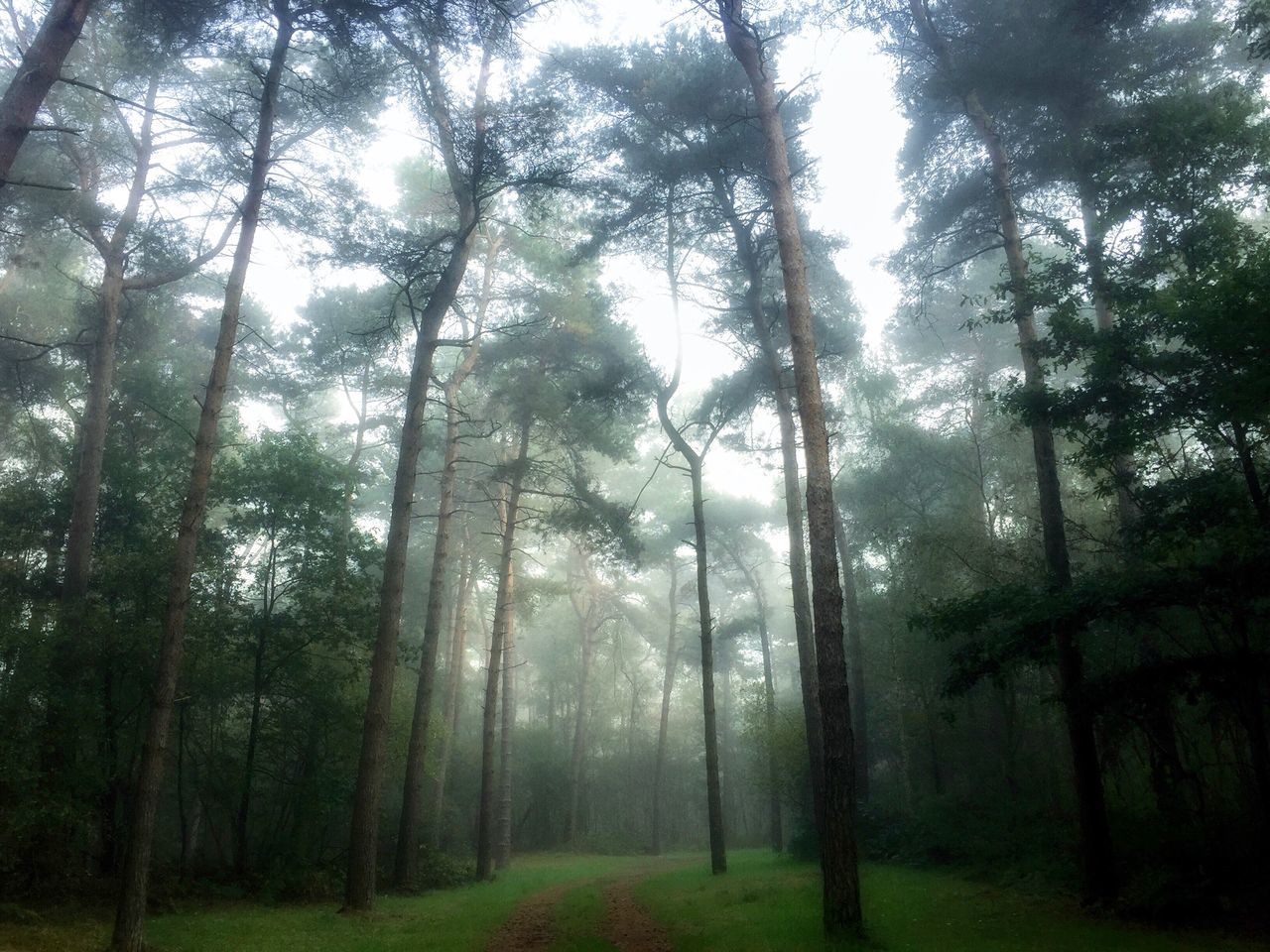 I came across a fallen tree, I felt the branches of it looking at me. Is this the place we used to love? Is this the place that I've been dreaming of? See The World Through My Eyes Somewhere Only We Know Tree Nature Forest Beauty In Nature 8wa Bluewinged Angel Landscape No People Fog Hello World Mist https://youtu.be/Oextk-If8HQ