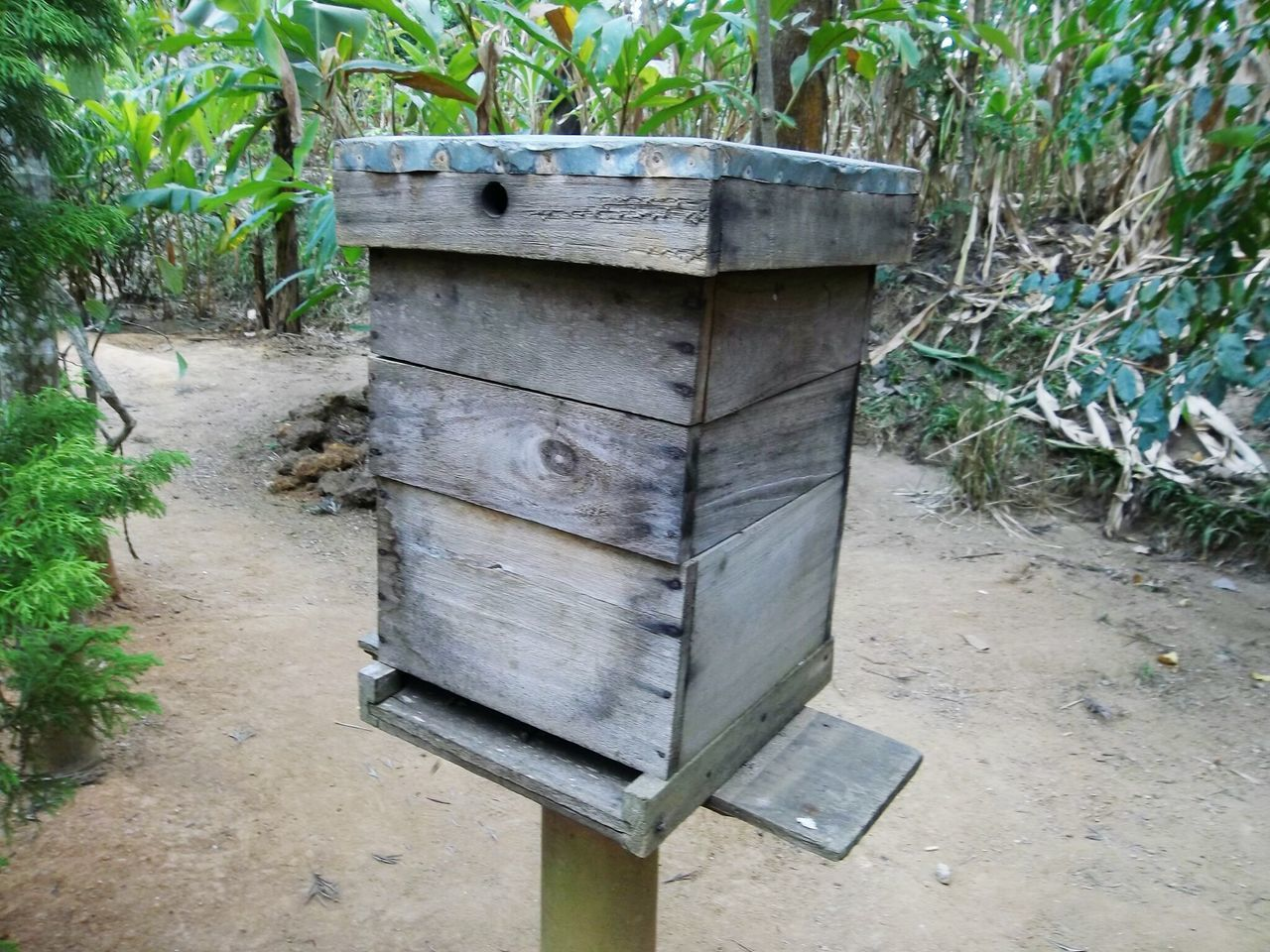 beehive, outdoors, box - container, apiculture, day, no people, wood - material, plant, animal themes, bee, nature, public mailbox, tree, close-up