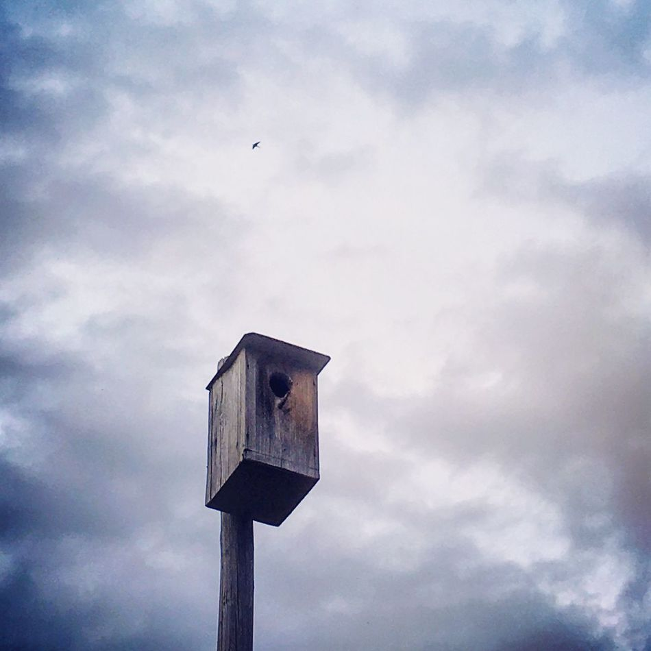 Bird house and a bird flying in the sky Bird Sky Cloud - Sky Low Angle View No People Animal Themes Animals In The Wild Birdhouse Outdoors Nature Perching Day Fly Flying Poetry Poetry In Pictures Poetrycommunity Cut And Paste