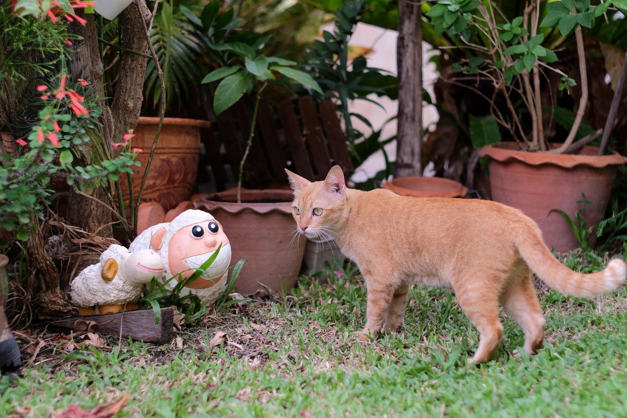 Beautiful stock photos of garden,  Alertness,  Animal Representation,  Animal Themes,  Cat