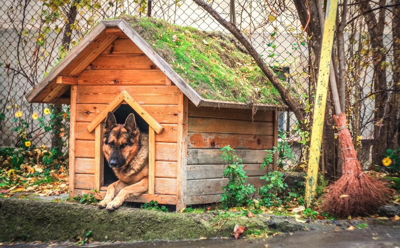 Beautiful stock photos of german shepherd, Animal Themes, Broom, Chainlink Fence, Day