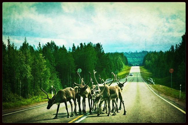 Wanderlust Don't Worry, Be Happy Lapland Authentic Moments Snapshots Of Life Landscapes With WhiteWall
