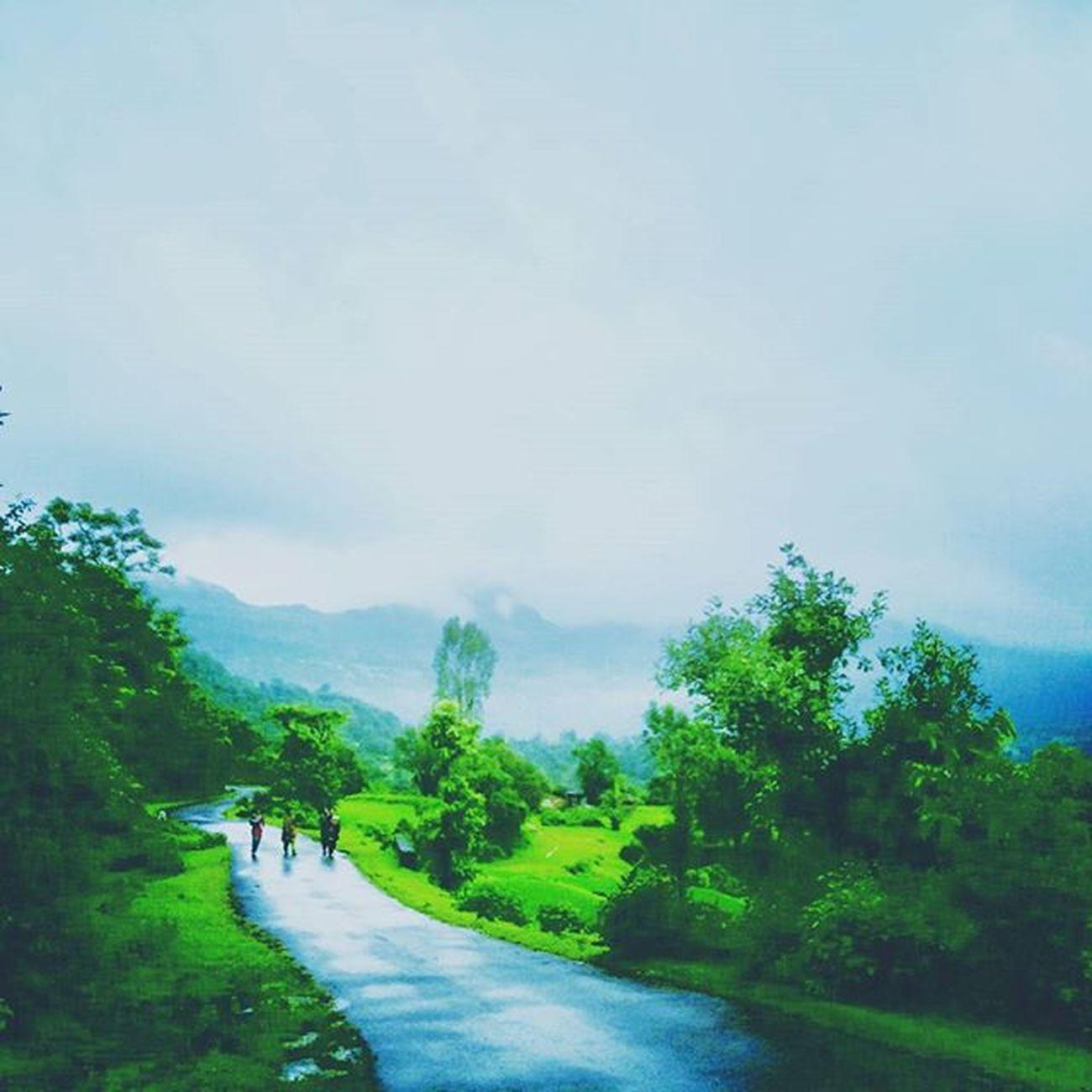Look like painting more than click... Nature Naturelovers Natureclicks Rain RainyDay Amazing Colors Awesome Fog Foggy India Maharashtra Pune Photooftheday Picoftheday Perfectnature Dm Camera Greenery Wild Wildlife Travel Weather Instagram