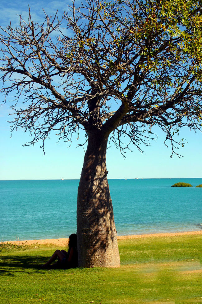 Beauty In Nature Blue Boab Tree Branch Day Grass Green Green Color Growth Horizon Over Water Idyllic Landscape Nature No People Non Urban Scene Non-urban Scene Outdoors Remote Scenics Sea Sky Tranquil Scene Tranquility Tree Tree Trunk