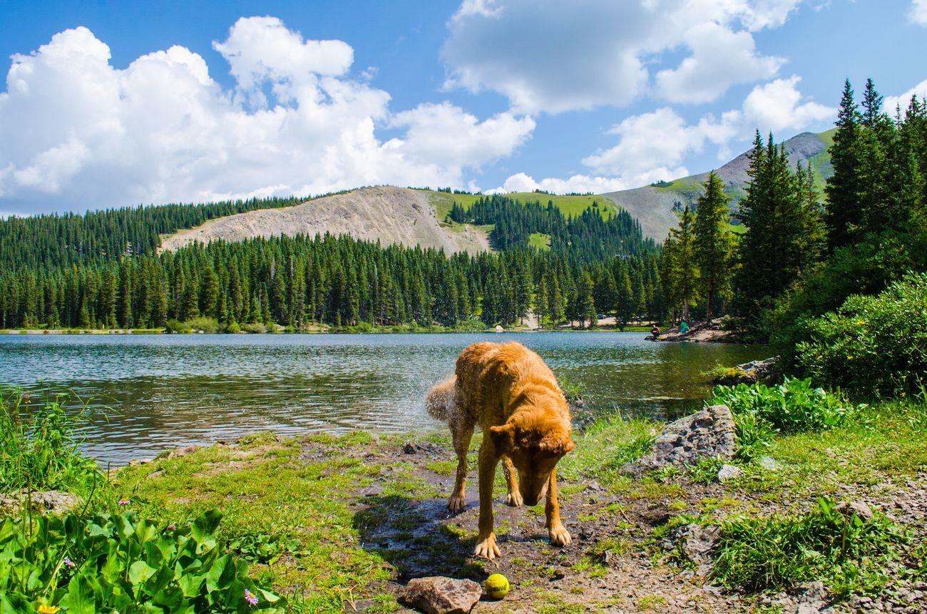 Colorado Alta Lakes Louis shaking it up Outdoors
