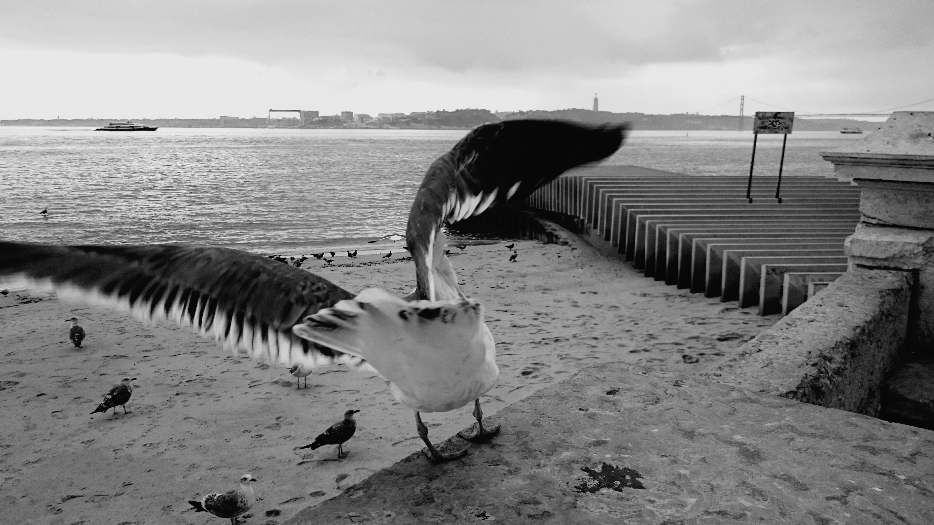 bird, animal themes, animals in the wild, water, wildlife, seagull, sea, flying, spread wings, sky, one animal, nature, sea bird, beauty in nature, beach, perching, lake, shore, outdoors, no people