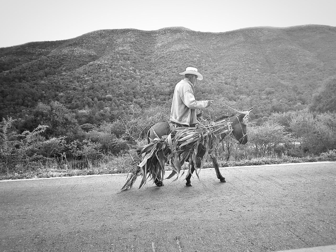 The Drive Domestic Animals Real People Outdoors Working Animal Rural Scene Occupation Nature Mexican Culture Mexicanphotographer Mexican Scene Black & White On The Road Street Photography Full Length Two People Domestic Animals Real People Livestock Outdoors Men Mammal Horse Only Men Working Animal