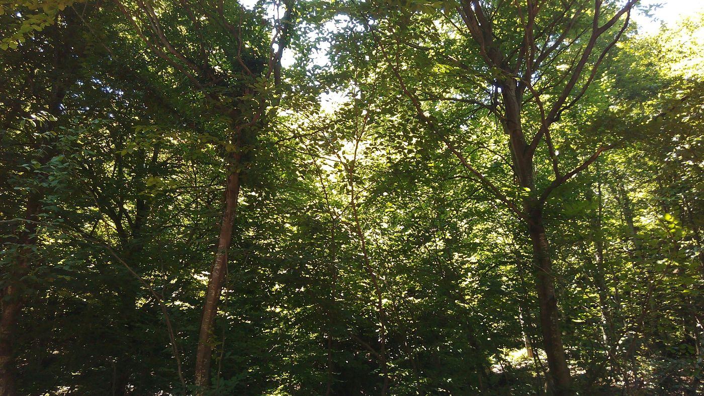 Ormanan gezisi basladı