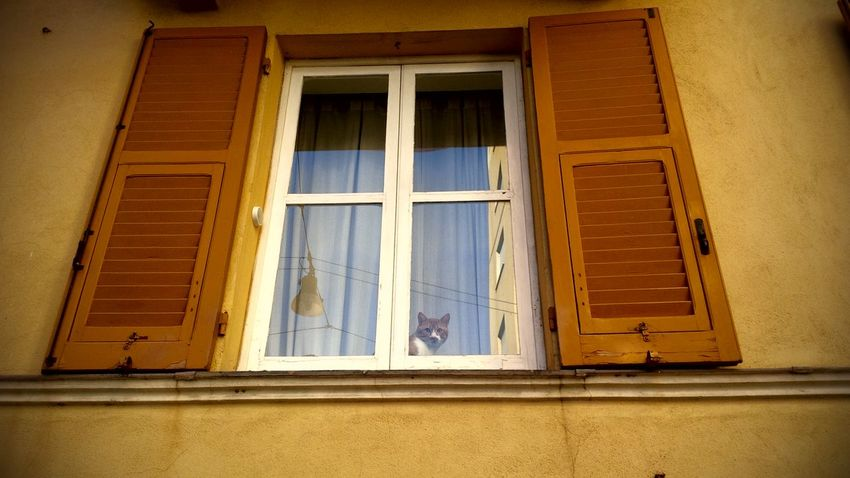Angry Animal Cat♡ Day FUNNY ANIMALS Home See Window
