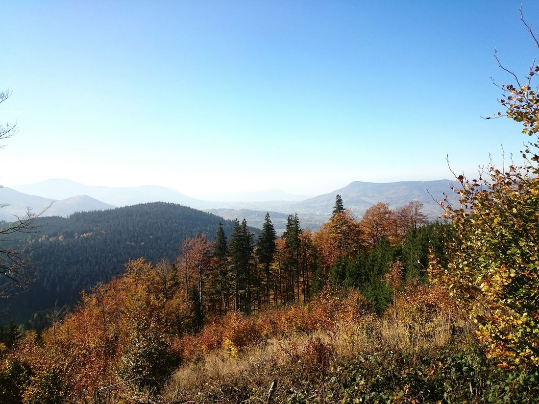 Lysa hora Sunny Day Forest Autumn Nature Beauty Landscape Mountains Beskydy