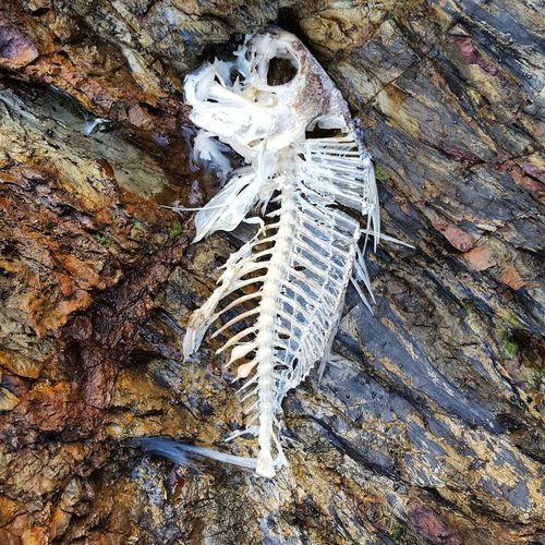No People High Angle View Day Close-up Outdoors Animal Themes Nature Skeleton Fish Shore Beach Beachphotography Decaying CIRCLE Of LIFE Circle Of Life And Death