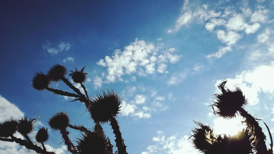 Sky Nature Low Angle View Blue Cloud - Sky Beauty In Nature Close-up Beauty In Nature ❤️❤️ Nature Beauty In Nature Outdoors No People