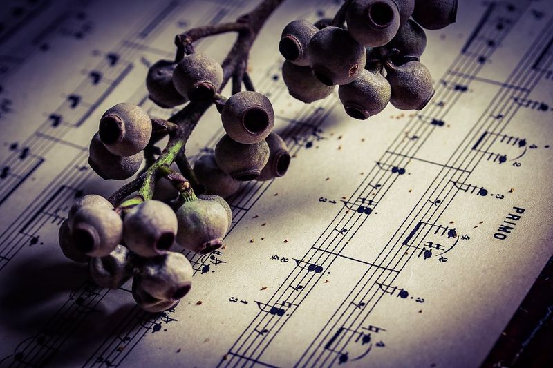 溢レル Macro Flowers Dry Flower  Music Score Seeds Antique Getting Inspired In My Room Light And Shadow Flowerlovers From My Point Of View EyeEm Gallery Still Life