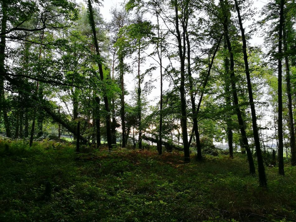 Forest Tranquil Scene Scenics Nature WoodLand Outdoors Lush Foliage Green Remote Tranquility Growth Beauty In Nature Fairyforest Dromoland Mooghaun Woods Tourism Wildatlanticway Ireland
