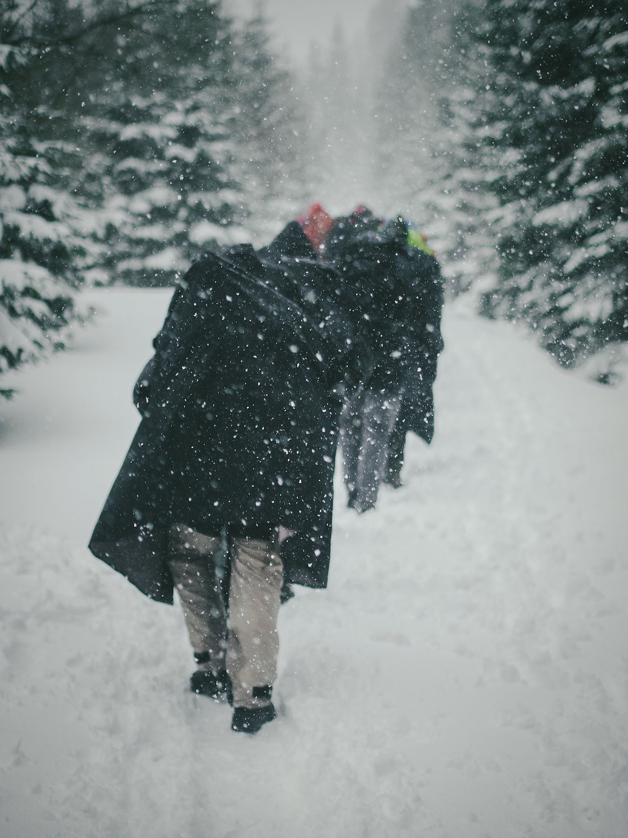Cold Temperature Snow Winter Weather Real People Walking Outdoors Snowing Lifestyles Warm Clothing Rear View Nature Day One Person Men