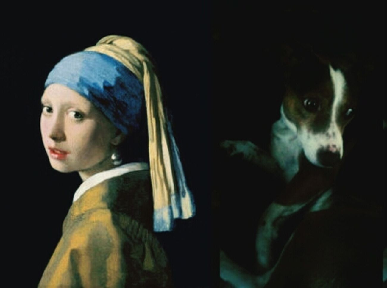Lucky Pets My Dogs Are Cooler Than Your Kids Vermeer