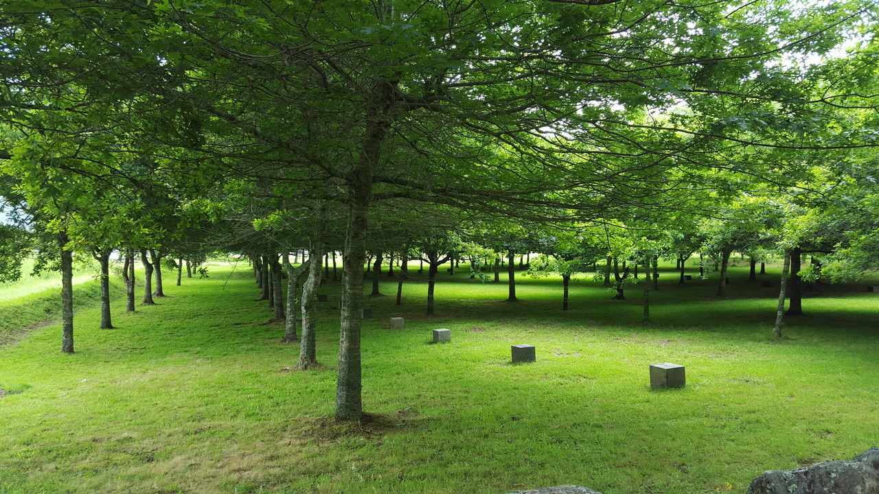 Azores Beauty In Nature Branch Day Grass Green Green Color Green Tree Growth Nature No People Outdoors Sky Stone Tree