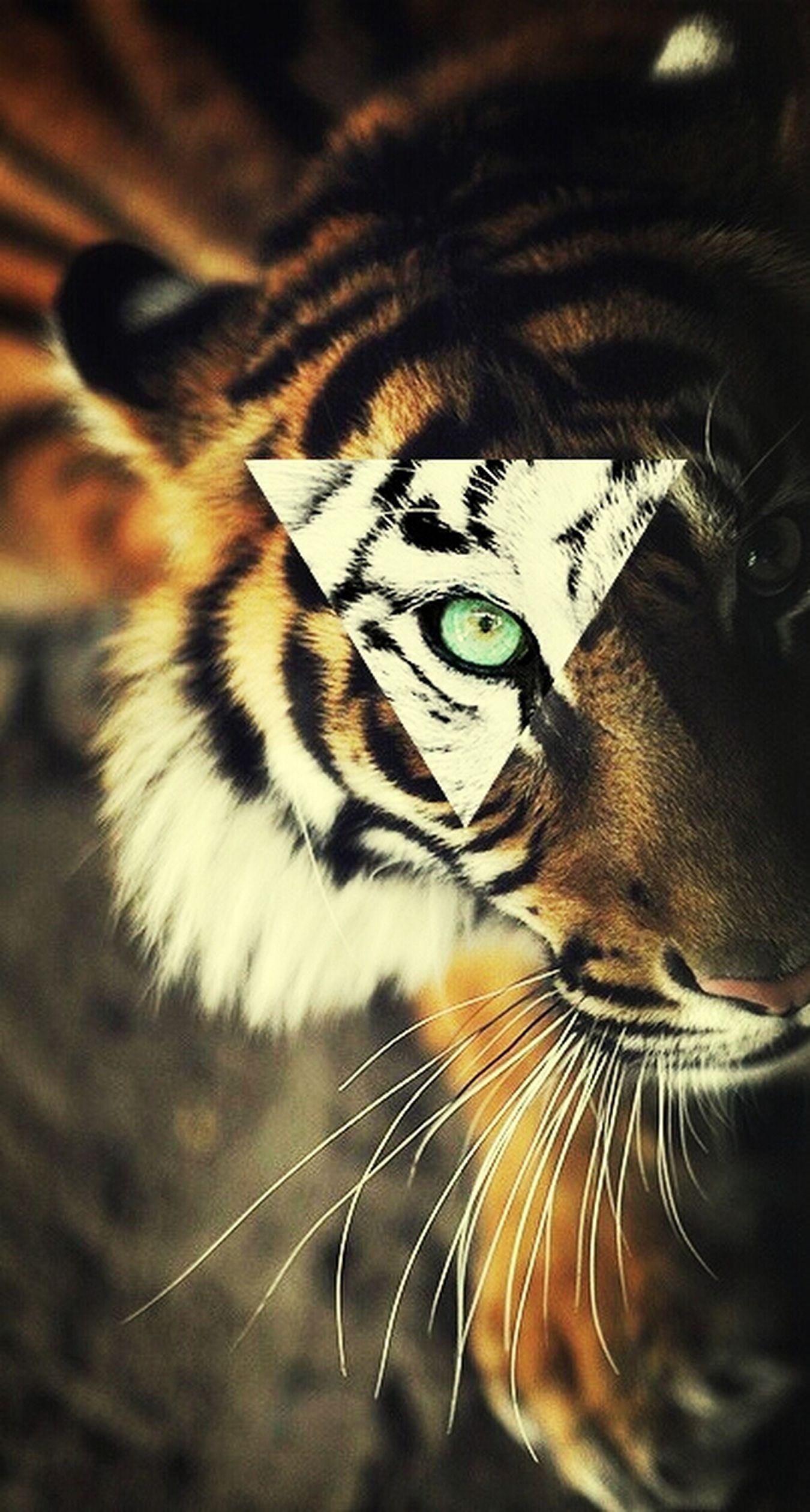 Le tigre peut être en liberté pas rapports à un Homme qui sera toujours enfermé par les autres ou par lui même Liberty Animals Poeme Le Sens De La Vie