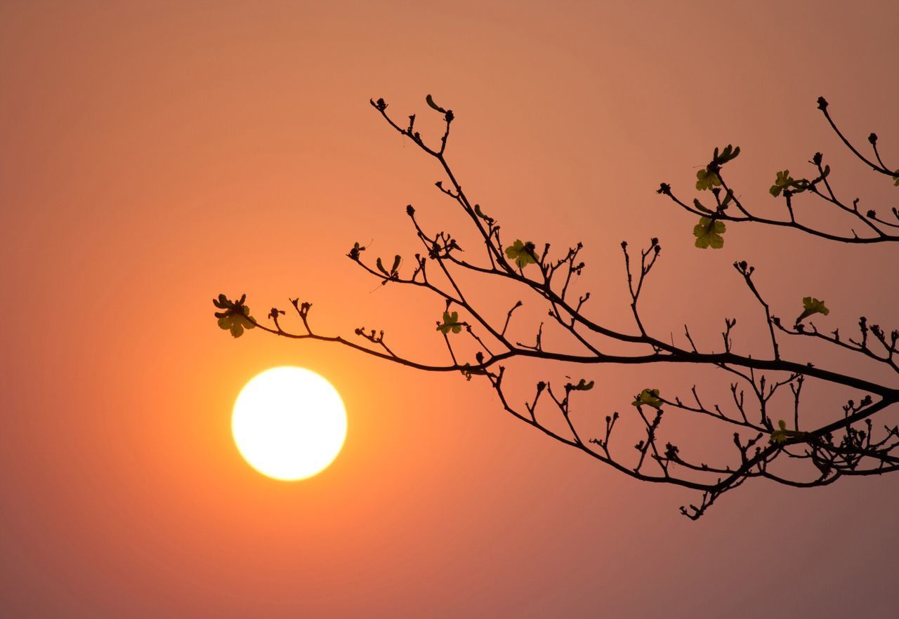 Sunset Orange Color Sun Silhouette Nature No People Moon Branch Clear Sky Beauty In Nature Sky Tree Solar Eclipse Astronomy