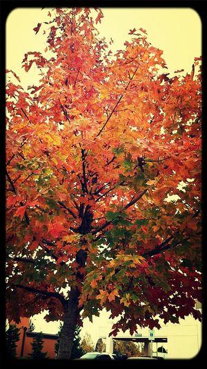 I love trees like this XD Trees Fall Beauty