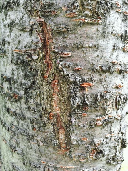 Nothings Perfect Bark Bark Texture Cherry Tree Beauty In Nature Close Up Nature Raw Nature First Eyeem Photo Scared Strength Healing Old Wounds Beauty In Imperfection