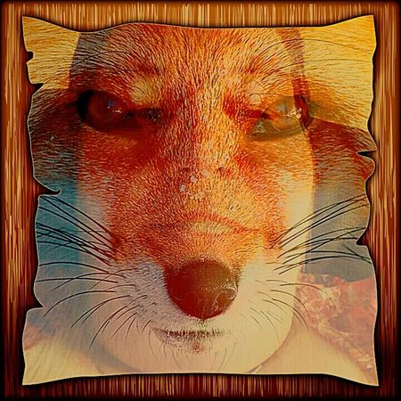 Graphic Textures Graphic Style Graphicart Graphic Design Days . Hiding behind my foxy self. Beauty Redefined