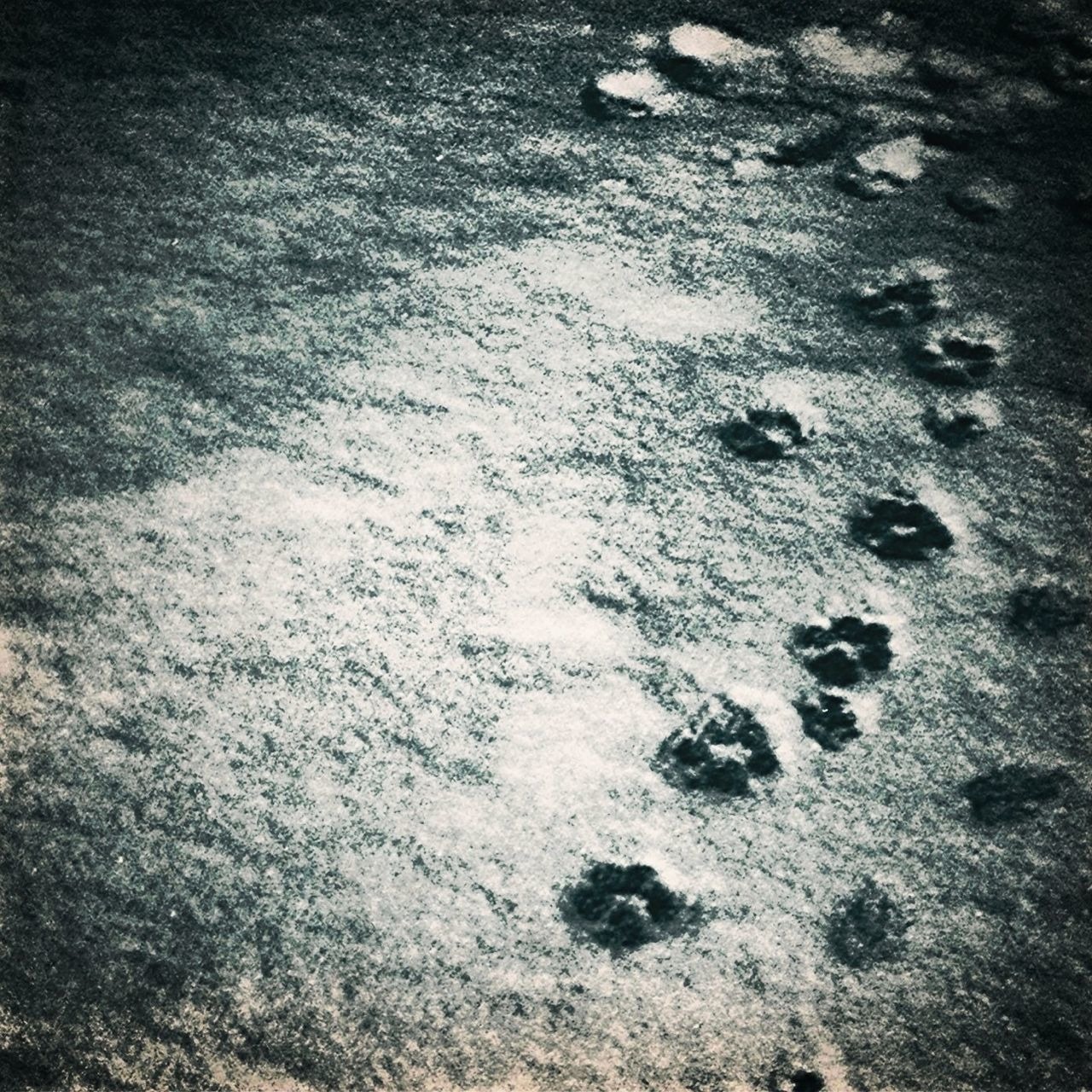 cold temperature, snow, winter, no people, high angle view, footprint, paw print, day, nature, backgrounds, outdoors, close-up