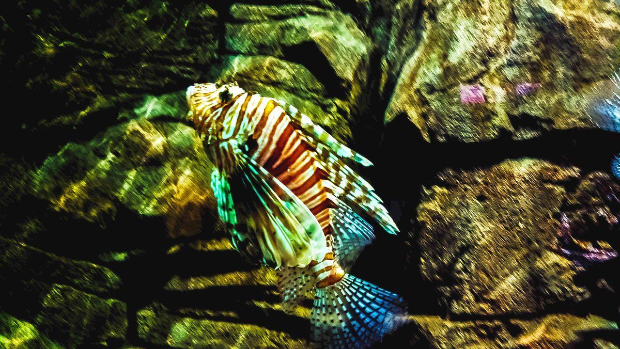 Coral Coralfish Underwater UnderSea No People Indoors  Close-up Tropical Paradise Travel Destinations Nature Indoor Aquarium Fish Multicolor Vibrabt Aquarium Life