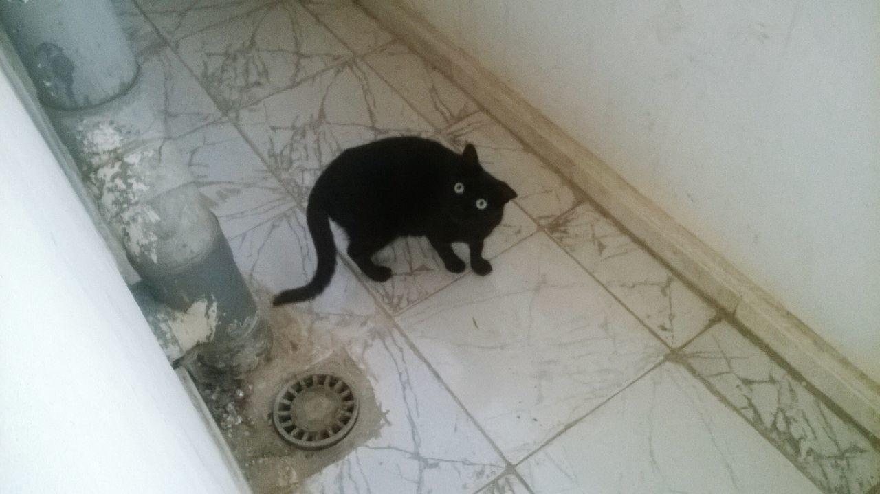 Cats Black Cats Animals Cute Pets