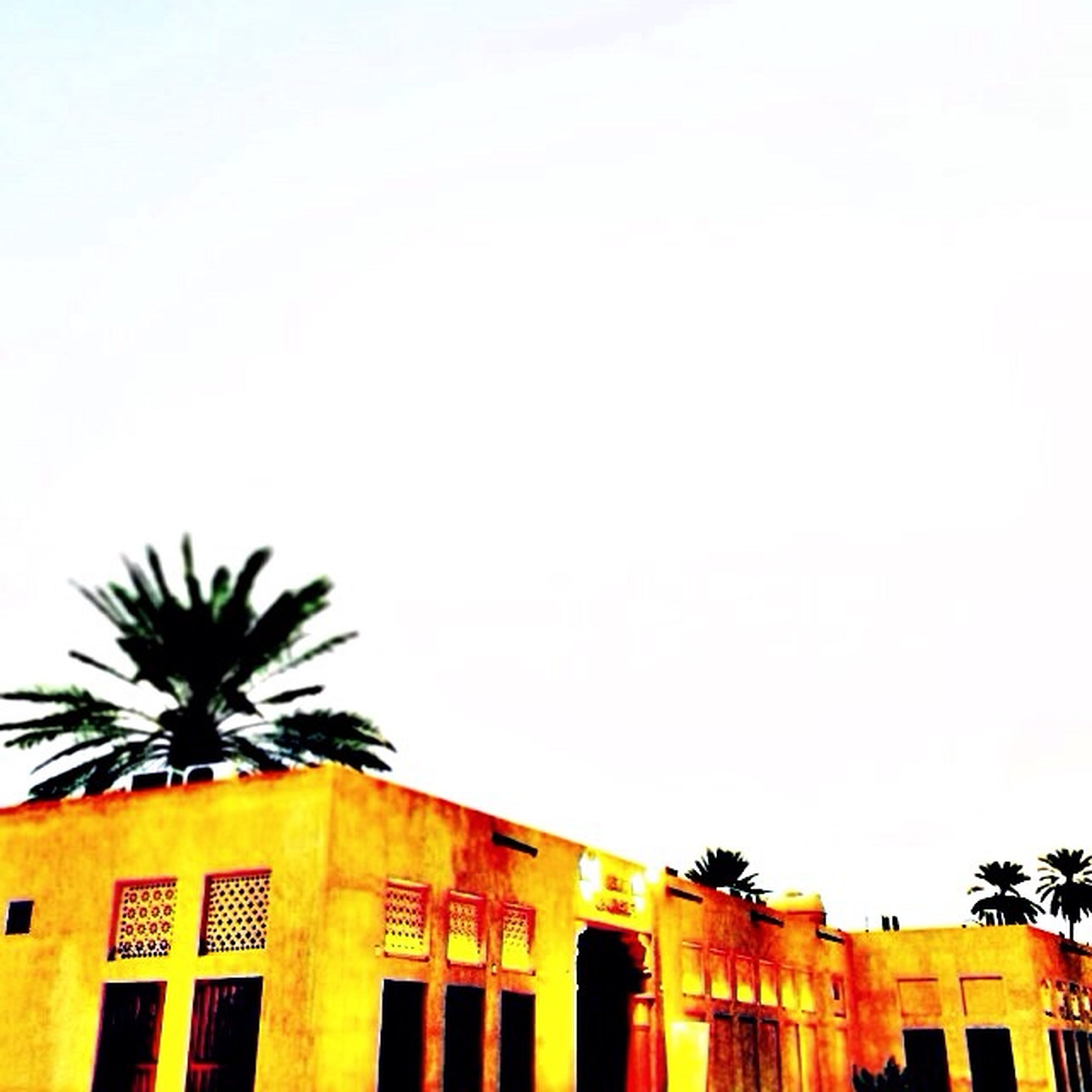architecture, built structure, building exterior, clear sky, copy space, low angle view, house, residential structure, high section, residential building, palm tree, building, yellow, outdoors, no people, tree, sky, day, window, roof