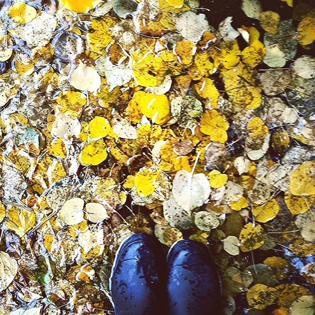 Standing Yellow Real People Lifestyles Directly Above Shoe High Angle View Personal Perspective Human Body Part Outdoors People Day Yellow Leaves Wellington Boots Autumn Colors