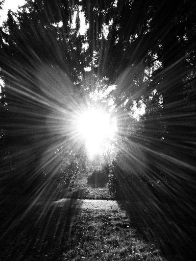 Sunshine Blackandwhite Black And White Sunporn