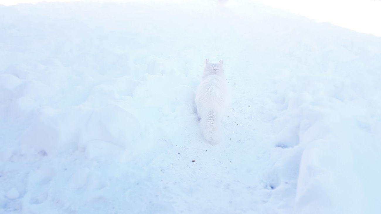 Cold Temperature Winter Snow Snowday Cat Eyeemcat Pet Littlelove 😻🐱🐈🐾🐾 Lucy
