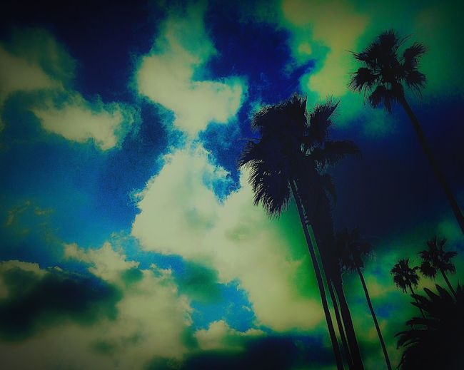 Clouds Gazing Palm Trees Picoftheday #photooftheday #photography #iphonesia #pikturdis #WeAreTheCulture #jj_forum #webstagram #world #streetstyle #shootinupny #statigram #randomfreshness #tbt #twitter #nycphotography #nyc #les #igdaily #everybodystreet #vsco #streetphotography #s Beach Photography BaSeKVisuals Agameoftones EyeEm Sunsetsniper Sunset 50shadesofcolors Eyeem Beach Shots Streetart #street #streetphotography #tagsforlikes #sprayart #urban #urbanart #urbanwalls #wall #wallporn #graffitiigers #stencilart #art #graffiti #instagraffiti #instagood #artwork #mural #graffitiporn #photooftheday #stencil #streetartistry #photograp Sunsets Beauty In Nature Venicelife California ShotOniPhone6 Colorsofthesky Fatalframes Beach Colour Of Life Can'teditunlessushootin Taking Photos Gods Light EyeEm Best Shots - Landscape m