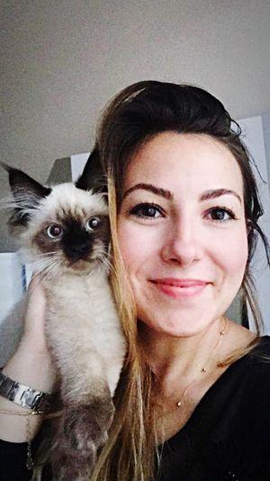 Pets Ragdoll Ragdollkitten Barfi Cat♡