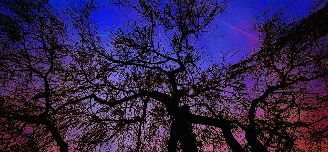 This tree created it's own universe. Tree_collection  Nature_collection Creative Samsungphotography Colors Imagination Eye4photography  Leap Year Check This Out