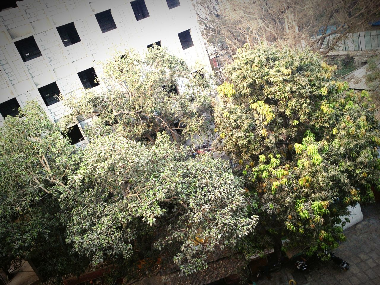 architecture, building exterior, built structure, tree, growth, plant, no people, day, outdoors, nature, city