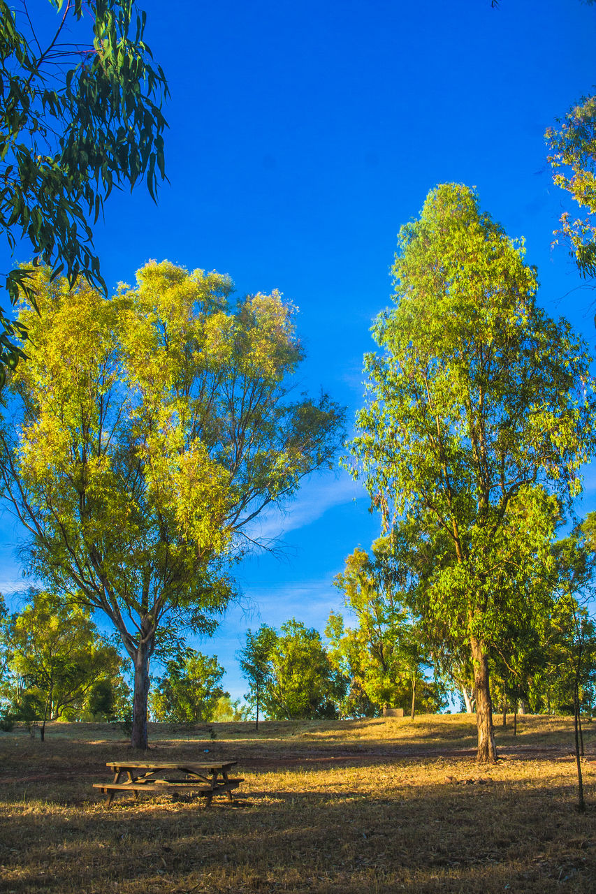 tree, blue, nature, beauty in nature, day, tranquility, no people, outdoors, growth, tranquil scene, scenics, sky, clear sky, landscape