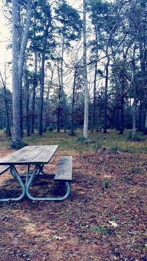 Woods Winter Trees Picnic Table Gloomyday