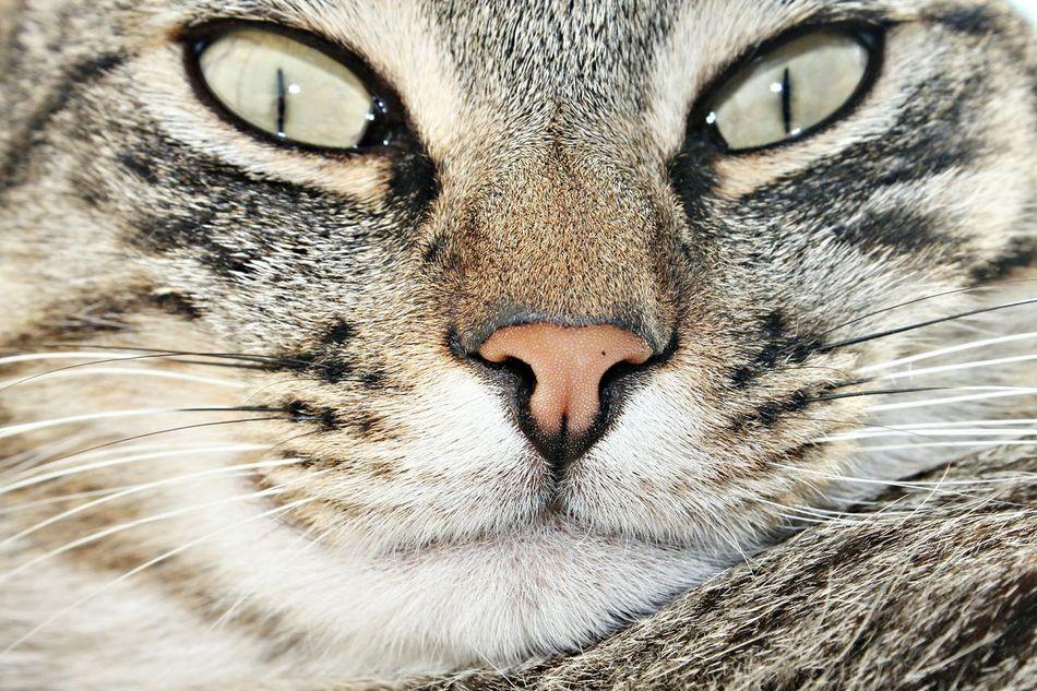 Green Eyes Eyes Mutt Mutts Feline Friend Felines Feline Companions Feline Gato Gatos Kittens Cute Pets Pet Pets Adorable Cat  Beautiful Animals  Animal Adorable Pets Adorable Animals Cute Cats Cute Beautiful Nature Animais