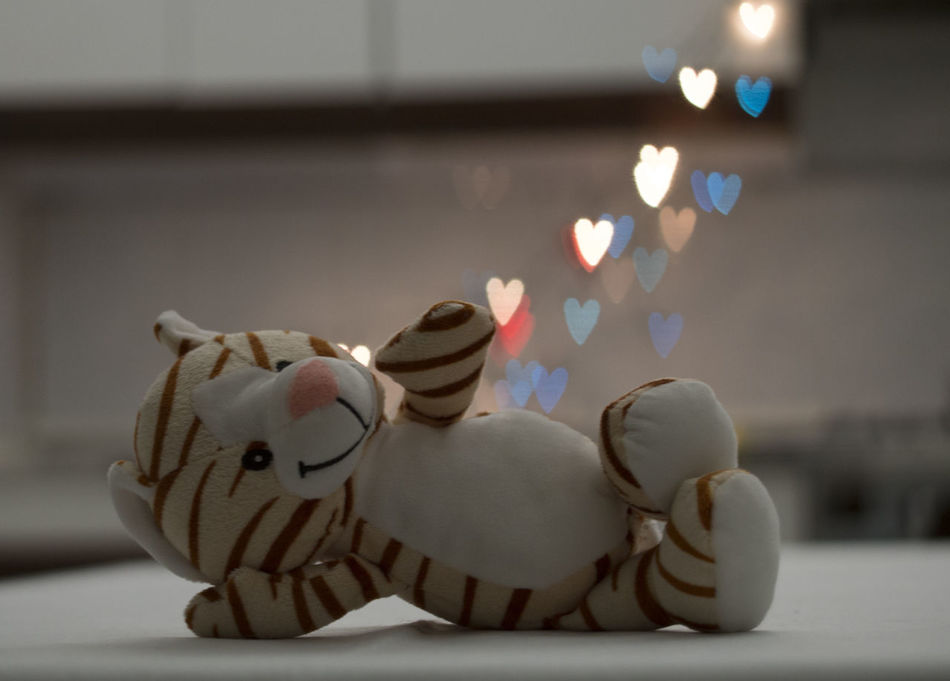 Amore Animal Representation Bokeh Bokeh Hearts Bokeh Love Bokeh Photography Bokeh Tiger Boken Light Boken Photo Celebration Christmas Decoration Close-up Day Focus On Foreground Heart Indoors  Love Muppet No People San Valentin San Valentine's Day Small Tiger Still Life Tiger Tradition