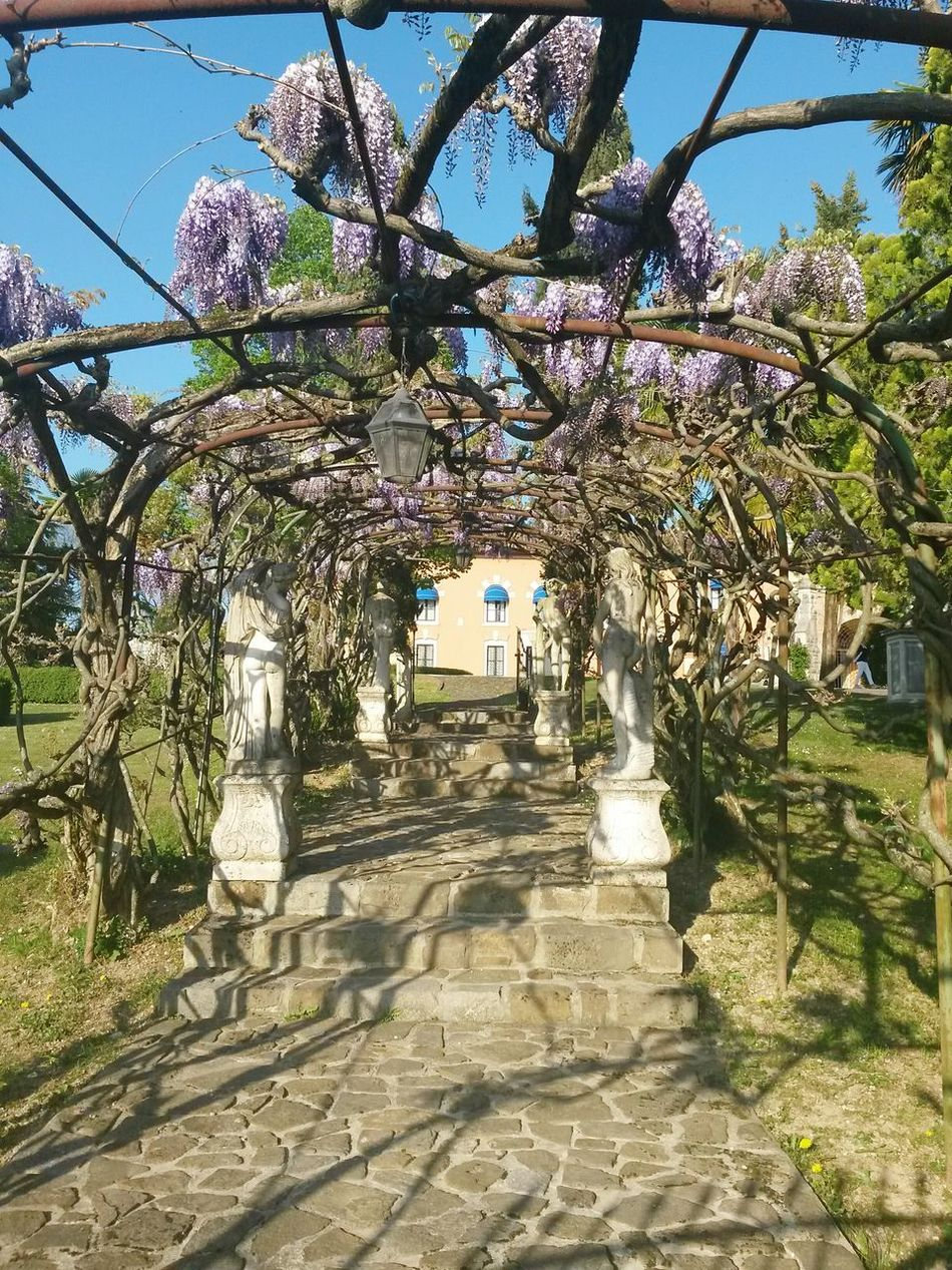 Un fresco tunnel profumato... Beauty In Nature Tree Nature Outdoors Glicineinfiore Glicine Flowers Flower Collection Castle Garden Castle Outdoors Blooming Flower Spring Flowers Travel Destinations Blossoms On Blue Sky