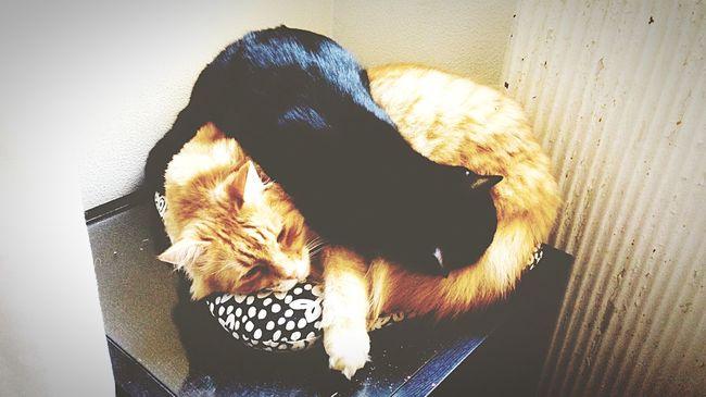 Cat Black Red Love Sleepy Sunday Afternoon